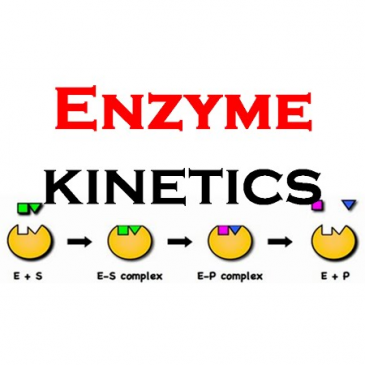 How to Perform Enzyme Kinetics Analysis
